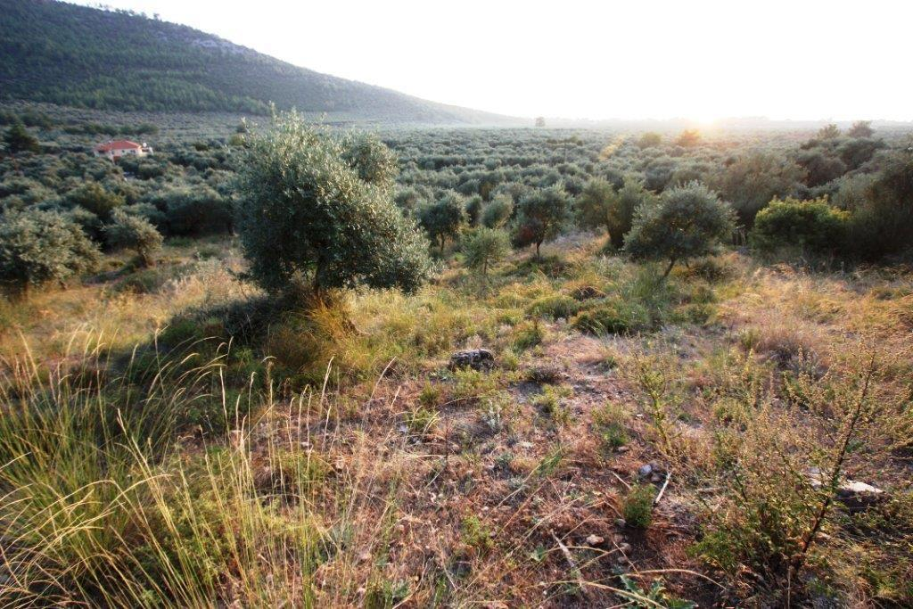 Argiro 1, Northern Aegean Islands, Greece - Beautiful plot of land with a private beach for sale in Greece