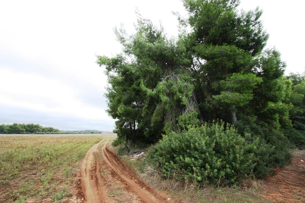 Land plot Sany 1, Halkidiki-Kassandra, Greece - Land plot in a very beautiful and quite place for sale