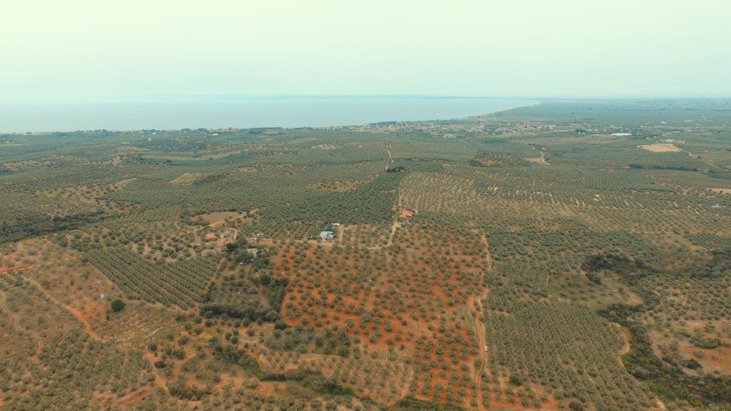 Olive groove, Halkidiki-Sithonia, Greece - agricaltural investment in Greece
