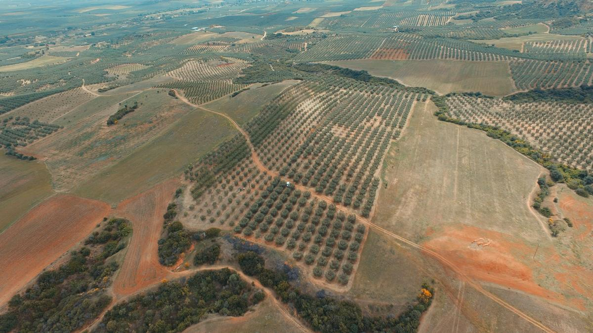 Olive groove 1, Halkidiki-Sithonia, Greece - agricaltural investment in Greece