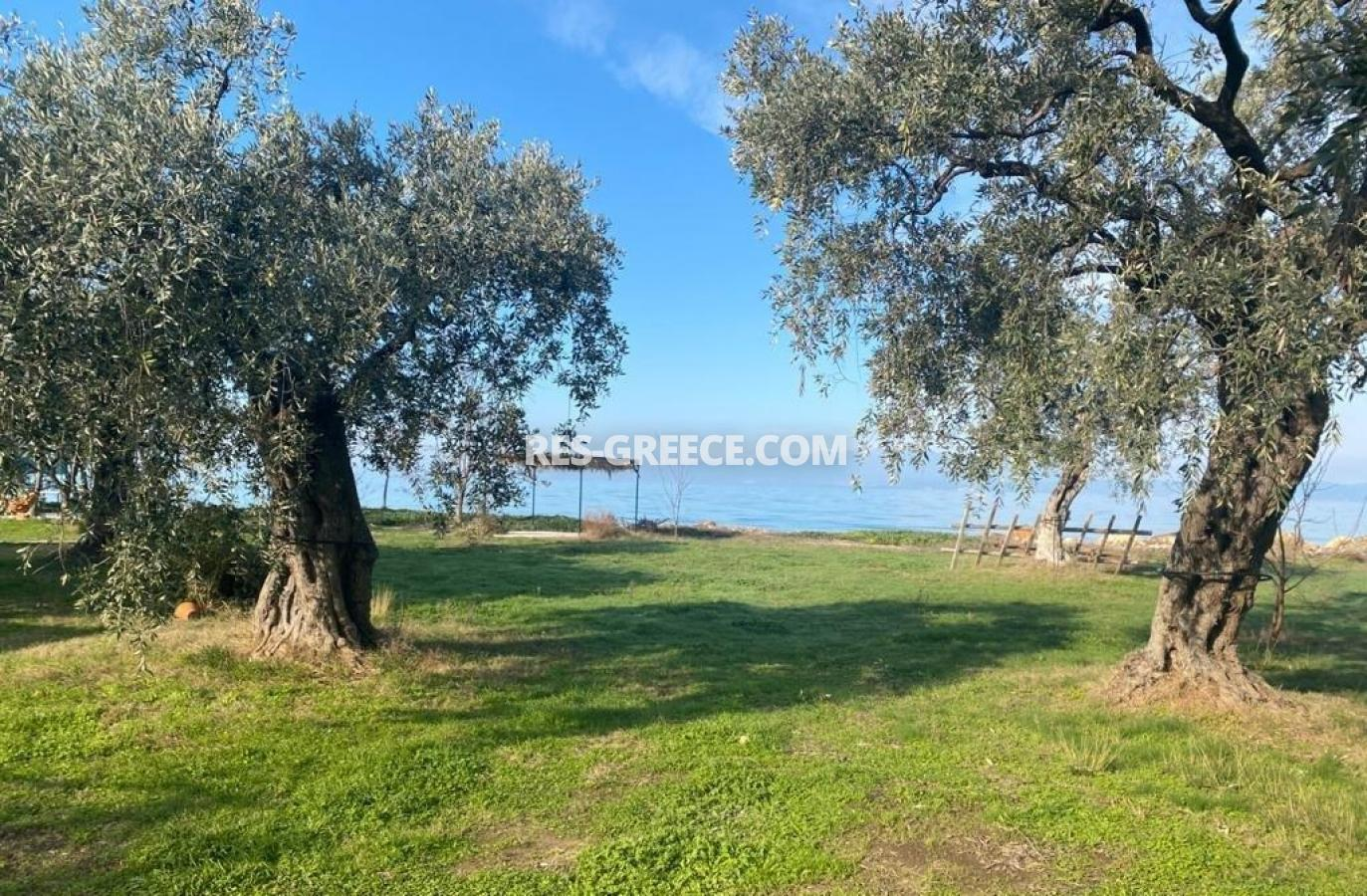 Pilos, Northern Aegean Islands, Greece - big beachfront plot with the for house for reconstruction - Photo 3