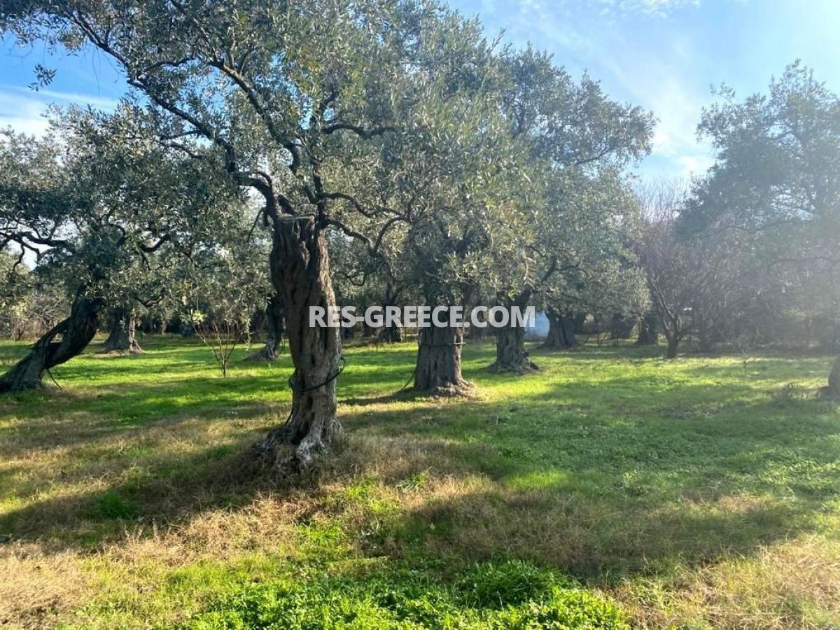 Pilos, Northern Aegean Islands, Greece - big beachfront plot with the for house for reconstruction - Photo 4